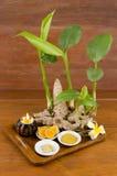 Zingiber purpureum Roscoe. Stock Photography