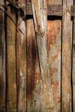 zink en bamboe Royalty-vrije Stock Foto