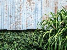 Zinkmuur en groene bladeren Stock Afbeelding