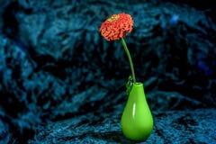 Голубой цветочный сад zinnia предпосылки в вазе Стоковое Изображение