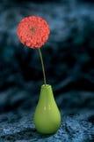 Отображайте на голубом цветочном саде zinnia предпосылки в вазе Стоковое фото RF