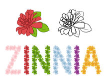 Zinnia colorful vector alphabet. Zinnia icon and alphabet design royalty free illustration