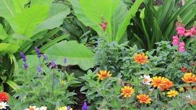 Zinnia del peoniesand de Snapdraggons en jardín de flores almacen de metraje de vídeo