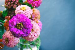 Zinnia flower blooms in vase for arrangement with copy space stock photography