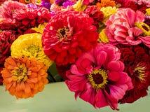 Zinnia flower bouquet Royalty Free Stock Photos
