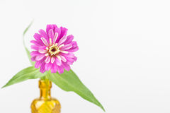 Zinnia flower in yellow vase Royalty Free Stock Photos