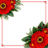 Zinnia flowers corner arrangements and a frame Stock Image