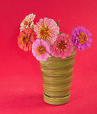 Zinnia flowers in different shades of pink Stock Images