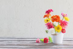 Free Zinnia Flowers In Bucket On White Background Royalty Free Stock Photography - 172934637
