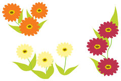 Zinnia flowers in three colours. Illustration of zinnia flowers in three colours with green leaves and white background vector illustration