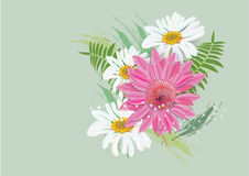 Zinnia flowers  on white background Royalty Free Stock Images