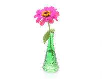 Zinnia in a glass bottle Stock Image