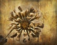 zinnia grunge Стоковое Изображение RF