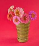 Zinniablommor i olika kupor av pinken Arkivbilder