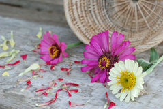 Zinniaen blommar på en träbakgrund Arkivbilder
