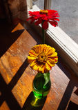 Zinnias dans un vase Photo libre de droits