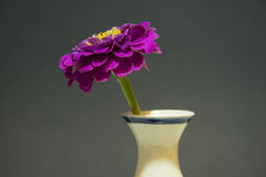 Zinnias in einem Vase Lizenzfreie Stockfotografie