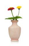 Zinnias flowers Stock Photo