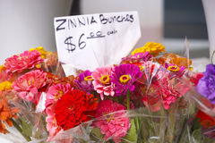 Zinnias Stock Photo