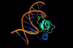 Zinque o dedo (3d estrutura), um cha estrutural do motivo da proteína pequena Imagem de Stock