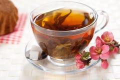 ziołowa herbata Zdjęcie Royalty Free