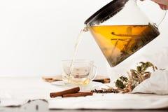 Ziołowa herbata od sosny pączkuje z cynamonu i malinki liśćmi Fotografia Stock