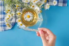 Ziołowa herbata z stokrotka kwiatami, pojęcie traktowania zimno i grypa, fotografia stock