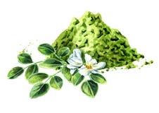 Ziołowi Moringa liście, kwiaty z proszkiem i Superfood Akwareli ręka rysująca ilustracja odizolowywająca na białym tle zdjęcia stock