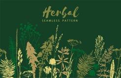 Ziołowy bezszwowy wzór Botaniczna granica Wektorowy trawy tło royalty ilustracja