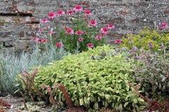 Ziołowy ogrodowy łóżko fotografia royalty free