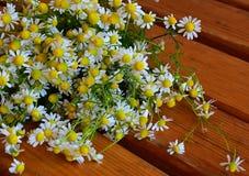 Ziołowy tło, chamomiles, organicznie zdjęcie royalty free
