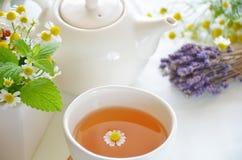 ziołowa herbata Fotografia Stock