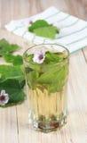Ziołowa herbata od marshmallow Fotografia Stock