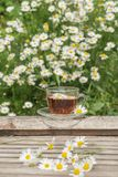Ziołowa herbata z chamomile na drewnianym stole na lecie pogodny mo Obrazy Stock