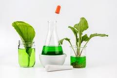 Ziołowa naturalna organicznie botanika Zdjęcie Royalty Free