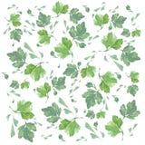 Ziołowa organicznie i korzenna akwareli ilustracja Zdjęcie Stock