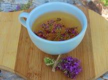 ziołowej herbaty macierzanka Obraz Royalty Free