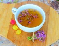 ziołowej herbaty macierzanka Zdjęcia Stock
