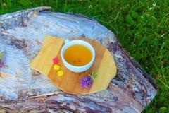 ziołowej herbaty macierzanka Zdjęcie Stock