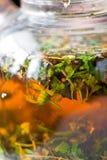 ziołowej herbaty tekstura Zdjęcia Stock