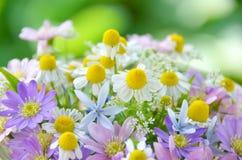Ziołowi kwiaty Obrazy Stock
