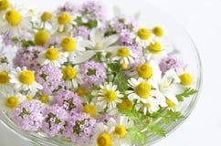 Ziołowy kwiat Zdjęcie Royalty Free