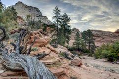 Zion国家公园闪电被触击的结构树 库存照片