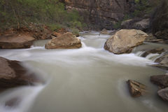 zion реки rapids каньона Стоковое Изображение RF