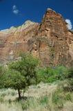 zion утра каньона Стоковая Фотография