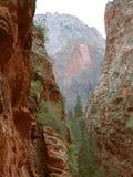 zion холодильника каньона Стоковые Фото