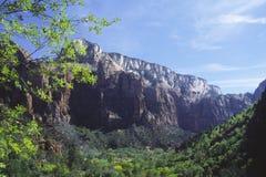 zion Юты весны национального парка дня Стоковая Фотография