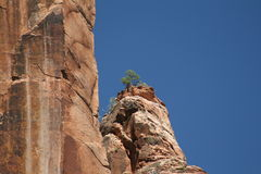 zion Юты национального парка Стоковые Изображения