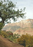 Zion Afternoon Royalty Free Stock Image
