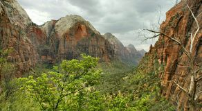 Zion Afternoon. Beautiful Zion Canyon is a true natural wonder. The canyon is a nine mile stretch of gorgeous rock cliffs and foliage unlike anywhere else on Stock Photos